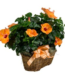 Double Hibiscus Basket
