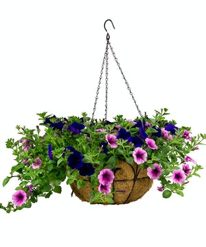 A beautiful assortment of annuals in a wrought iron hanging basket.