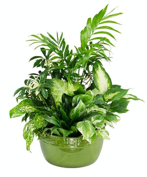 A design of lush green plants in a decorative green dish.