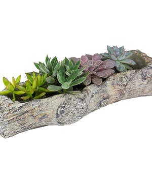A  set of four succulent plants in a rustic faux log.