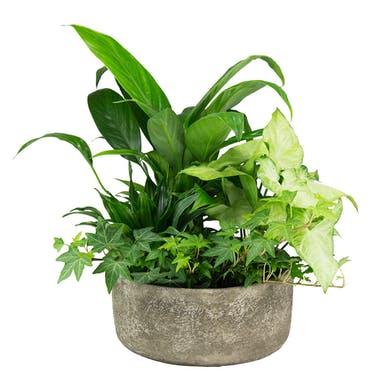 A lush dish garden designed in a faux stone oval container.