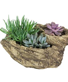 A trio of adorable succulent plants in a faux stone container.