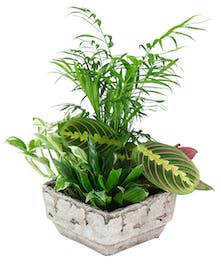 A stylsih design of lush green plants in a decorative faux stone planter.