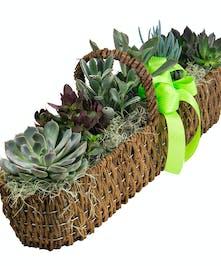 Succulent Canoe Basket