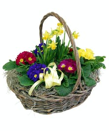 Primrose Basket with Tete-a-tete