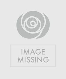 Zinnias, Sunflowers, Hydrangea