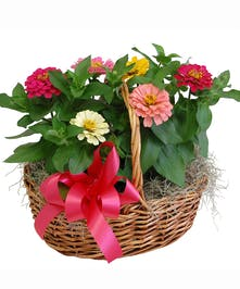 Double Annuals Basket
