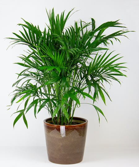 Green Plants & Succulent Gardens