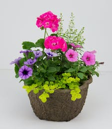 Grab & Go - Summer Planter